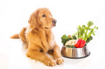 dog-veggies