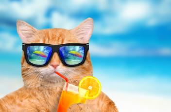 cat-drinking