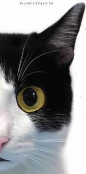 cat probiotic